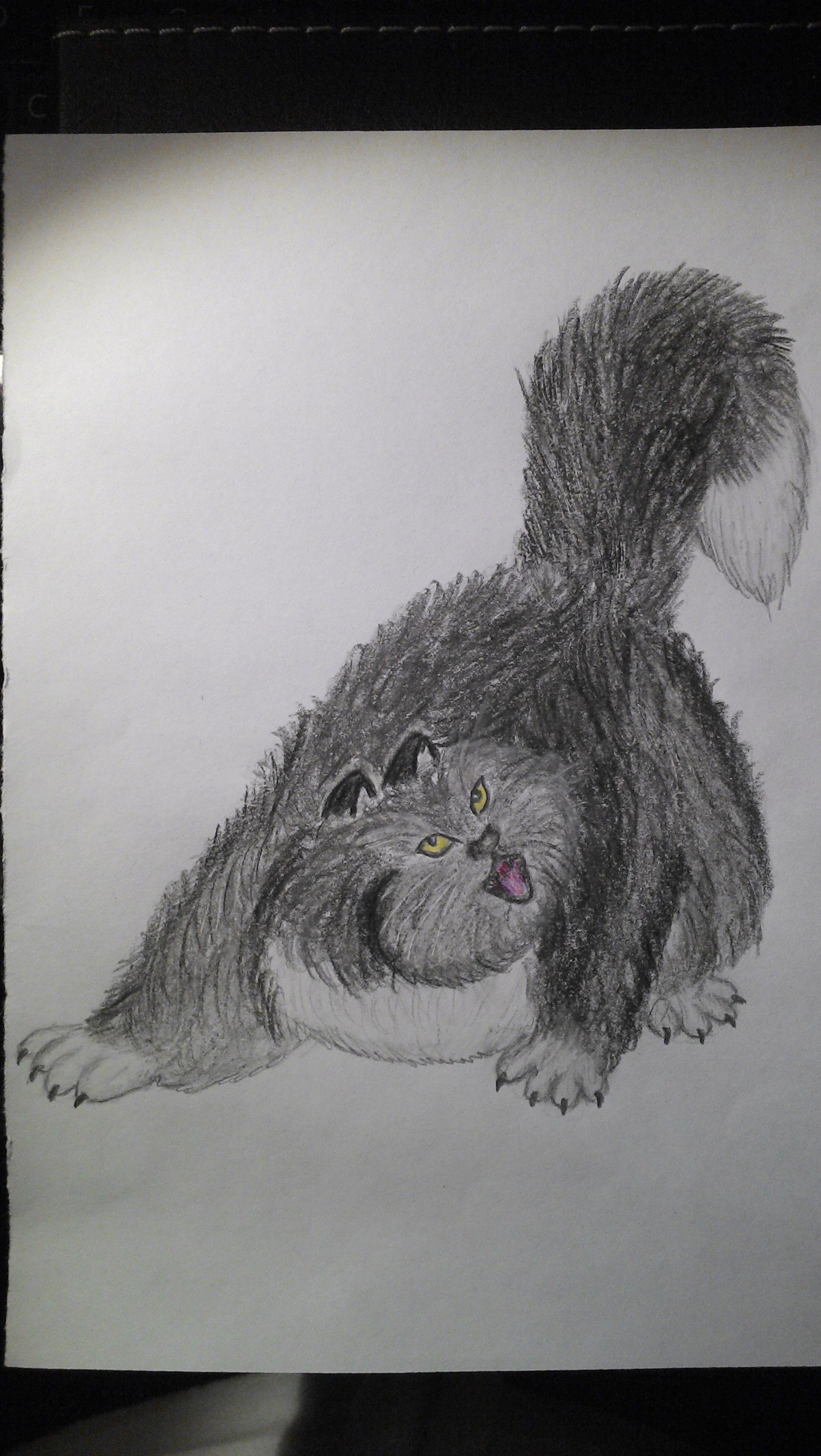 le chat Contrebasse